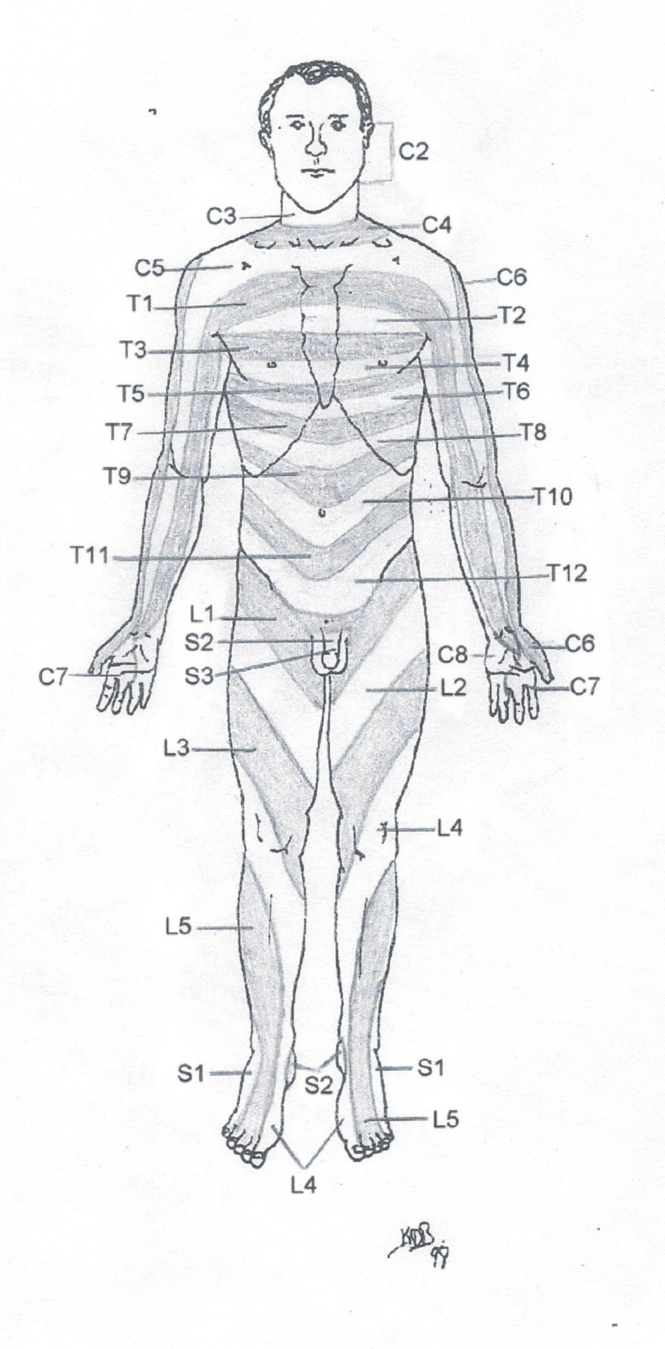 Dermatome Map http://www.webmanmed.com/painrefer_files/frntderm.html