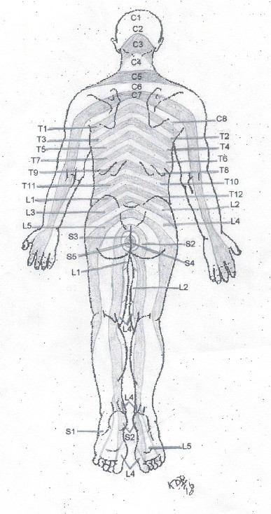 Dermatome Map http://www.webmanmed.com/painrefer_files/dermcharts.html